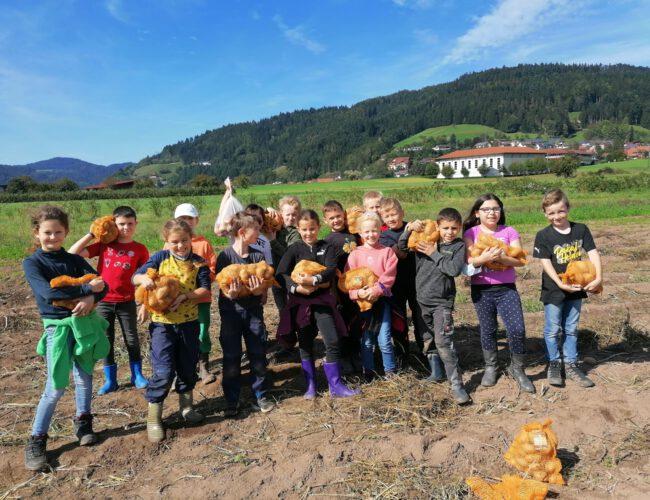 Kartoffelernte; Oktober 2021 (Klasse 3)